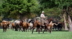 Texas Cattle Trail